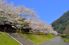 ふれあいパーク大原湖の桜サムネ