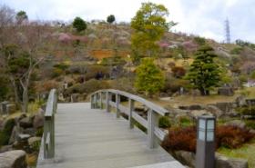 冠山総合公園の梅サムネ