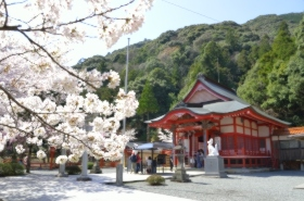 大寧寺の桜サムネ