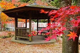 大寧寺の紅葉サムネ
