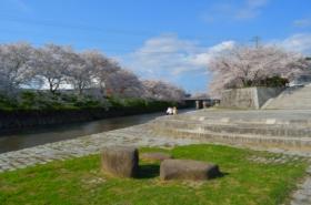 美祢さくら公園の桜サムネ