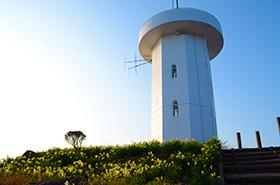 上盛山展望台の水仙サムネ