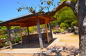冠山総合公園の牡丹サムネ