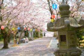 宇部護国神社の桜サムネ