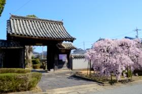 広雲寺の桜サムネ
