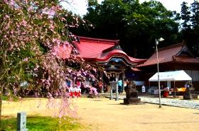 徳佐八幡宮の桜サムネ