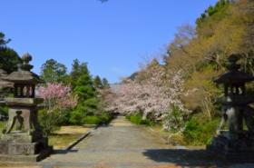 東光寺の桜サムネ