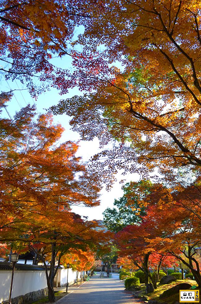 紅葉谷公園の紅葉_05