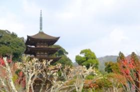 香山公園の梅サムネ