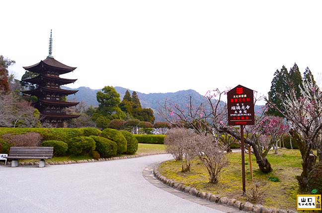 香山公園の梅_03
