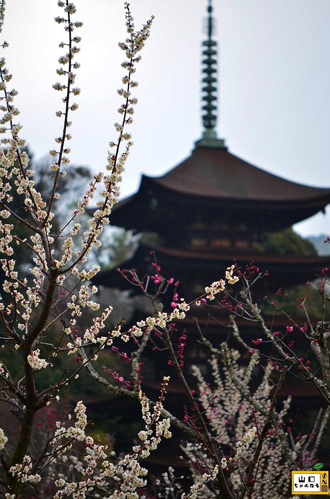 香山公園の梅_04