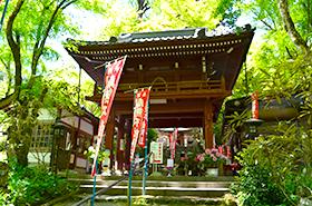 龍蔵寺の牡丹サムネ