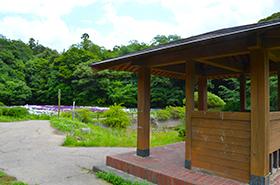 物見山総合公園の菖蒲サムネ