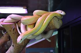 白蛇のサムネ