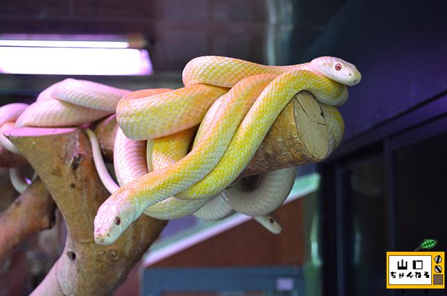 白蛇_05
