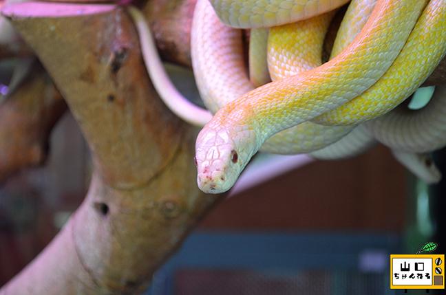 白蛇_07