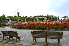 蜂ヶ峯総合公園のバラサムネ