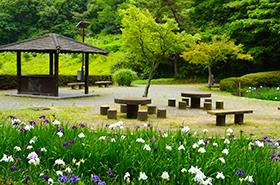 西緑地公園の菖蒲サムネ