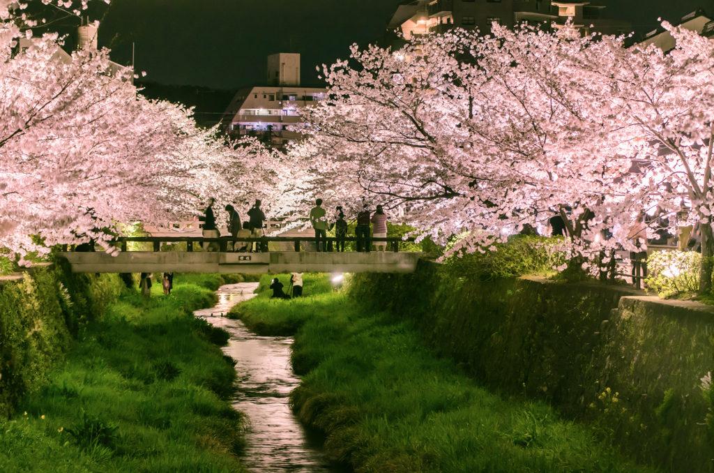 一の坂川の桜ライトアップ