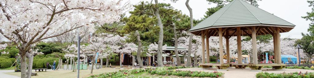 宇部の桜スポット