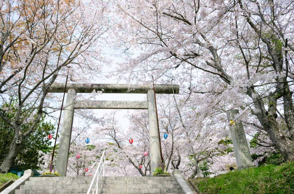 宇部護国神社の桜