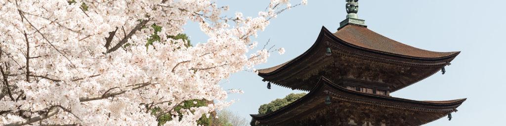 山口市の桜スポット