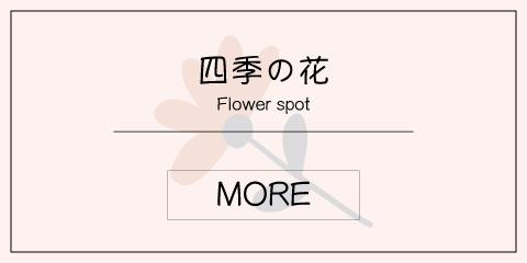 山口県の四季の花