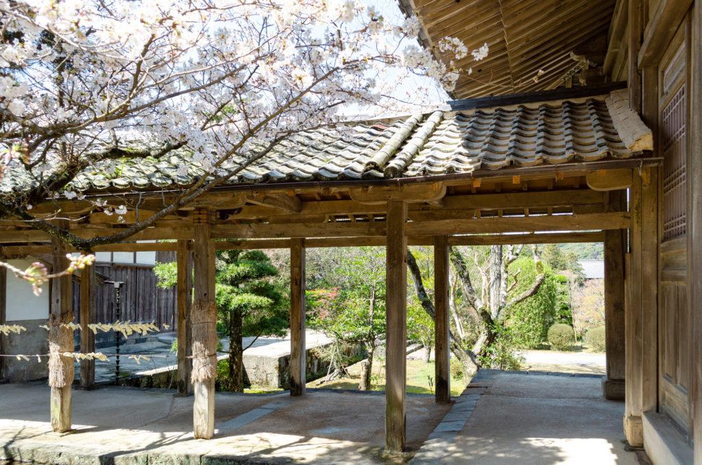 東光寺の桜