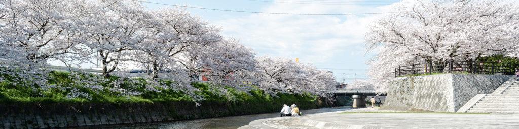 美祢の桜スポット