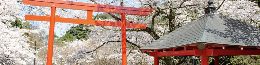 長門の桜スポット