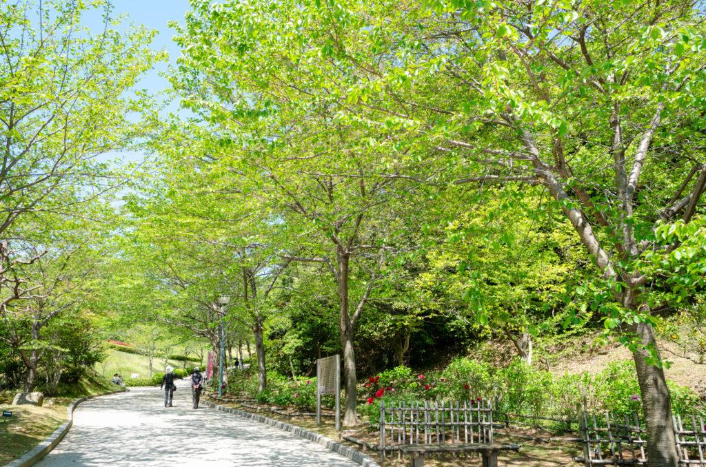 冠山総合公園の遊歩道