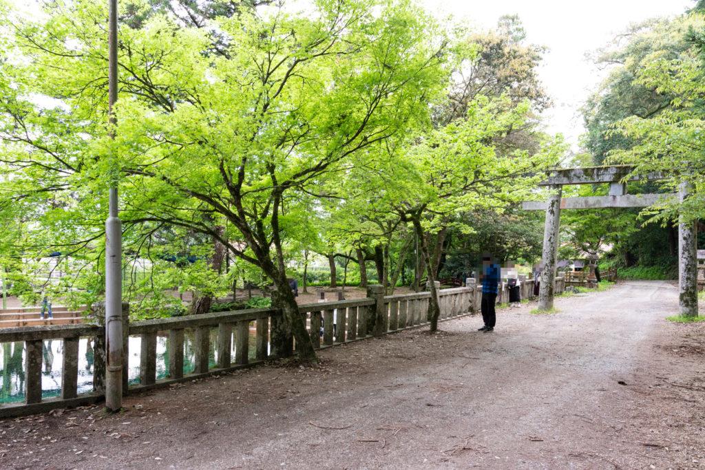 別府弁天池の遊歩道