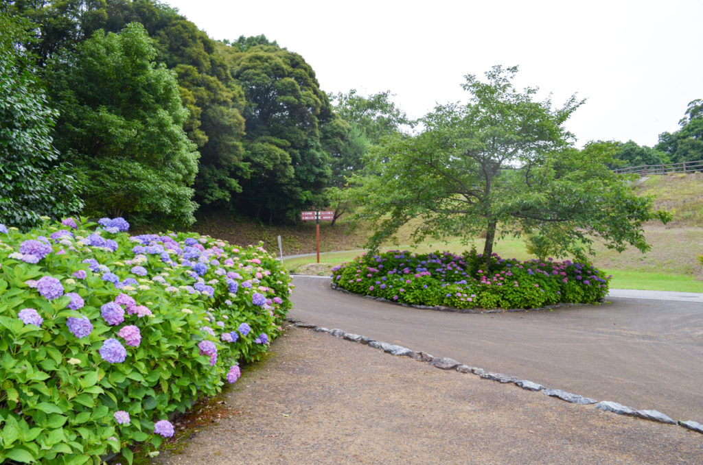 江汐公園の紫陽花園