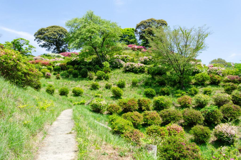 熊野山公園のつつじ