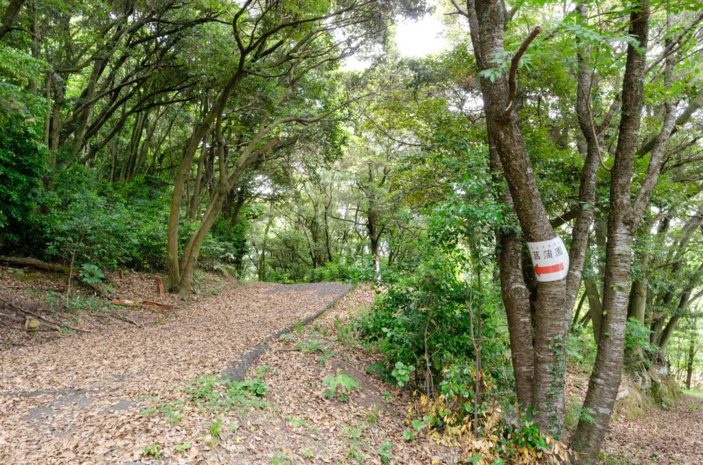 物見山総合公園の菖蒲園までの道