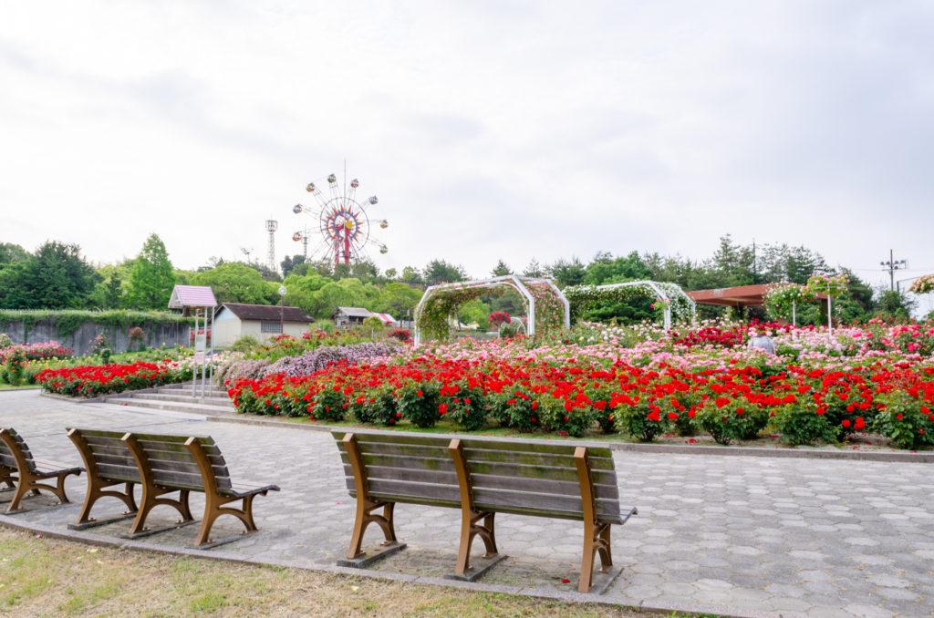 蜂ヶ峯総合公園の薔薇