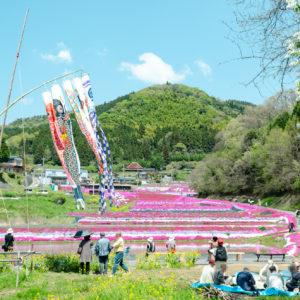 防府天満宮の桜サムネ