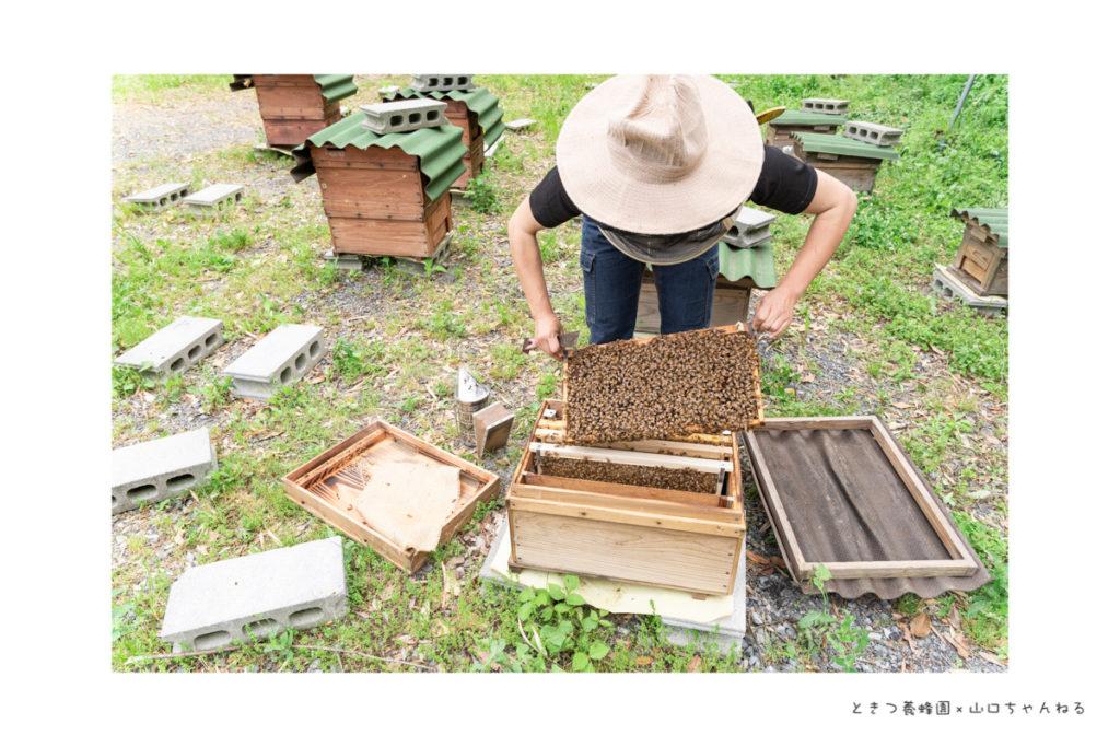 ときつ養蜂園の巣箱