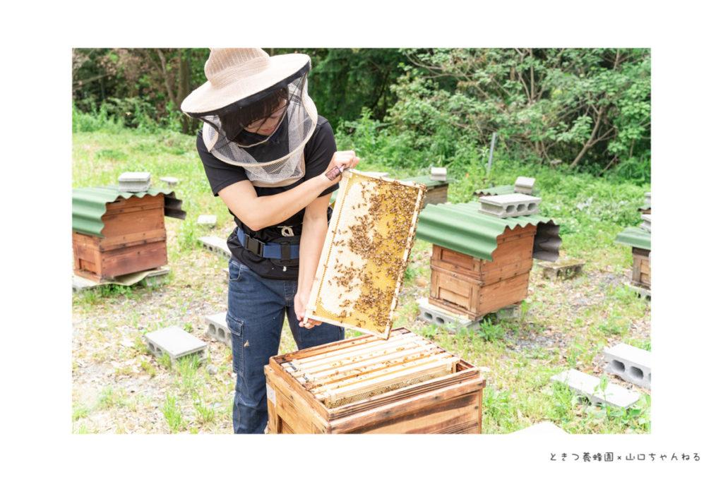 ときつ養蜂園の作業風景