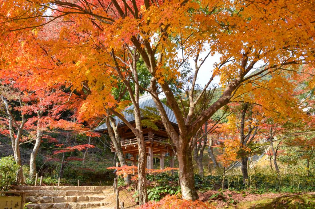 両足寺山門周辺の紅葉