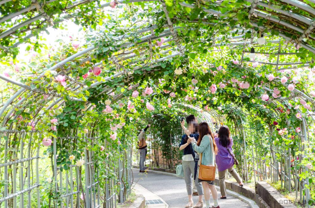冠山総合公園の薔薇回廊