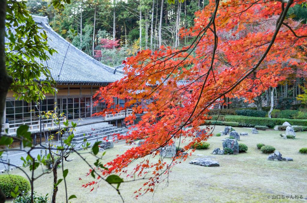 雪舟庭の紅葉
