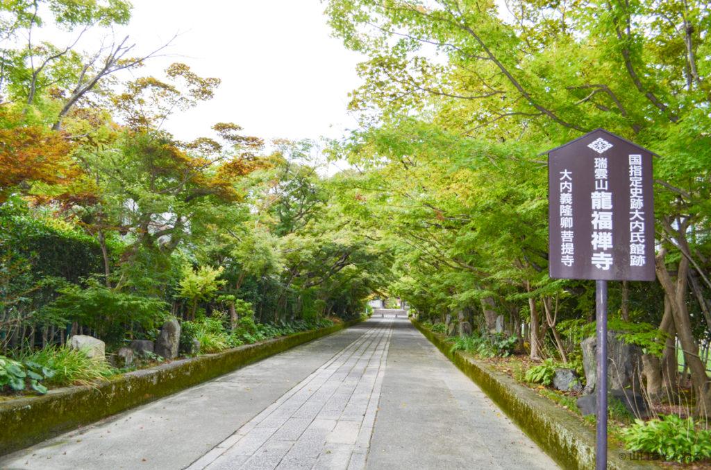 龍福寺の新緑