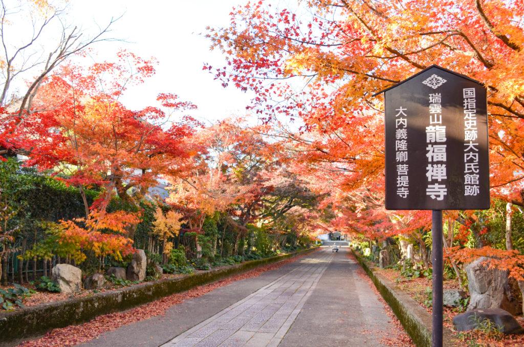 龍福寺の紅葉参道