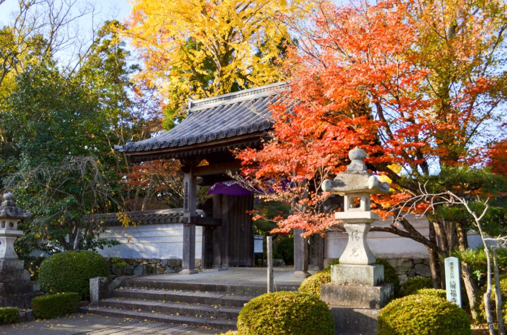 龍福寺の紅葉とイチョウ
