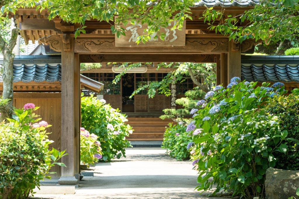 向徳寺の紫陽花
